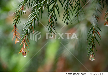 Forest Drops / Ecology Image 43222140