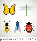 Insects icons ladybug snail wasp isolated vector 43224717
