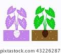 taroplant plant 43226287