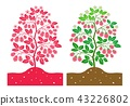 rastberry plant 43226802