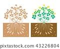 peanut plant 43226804