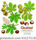 chestnut vector isolated 43227218