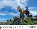 말, 방목, 맑음 43228090