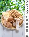 蘑菇 43230673