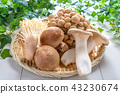mushroom, mushrooms, foodstuff 43230674
