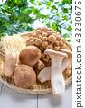 蘑菇 43230675