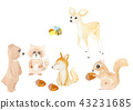 Bear deer bee tanuki fox squirrel acorn Animal in forest 43231685