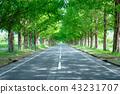 meta, sequoia, trees 43231707