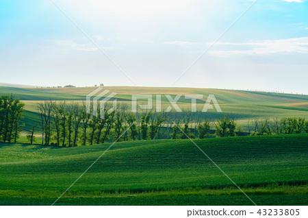 남모라비아평원, 키요프, 이탈리아 43233805