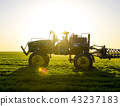 Tractor on the sunset background. Tractor with high wheels is making fertilizer on young wheat. The 43237183