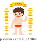 Illustration of Boy body parts diagram. 43237869