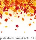 autumn background maple 43240733