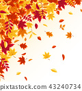 autumn background maple 43240734