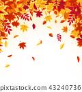autumn background maple 43240736