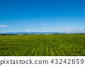 Chichibu mountain range from the Kawagoe city countryside 43242659