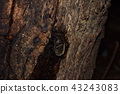 딱정벌레, 투구벌레, 투구 풍뎅이 43243083