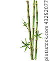 Green bamboo plants isolated on white background 43252077
