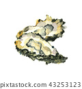 牡蠣 43253123