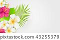 hibiscus palm plant 43255379