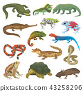 Vector reptile nature lizard animal wildlife wild chameleon, snake, turtle, crocodile illustration 43258296