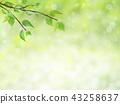 신록, 새잎, 어린 43258637