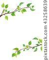 신록 잎 (PNG 투명) 43258639