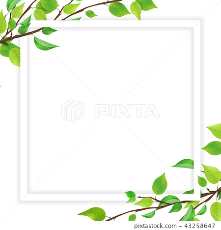Fresh green leaf white frame (PNG, transparent) - Stock