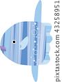 游泳翻车鱼 43258951