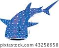 鯨鯊 鯊魚 圓點花紋 43258958
