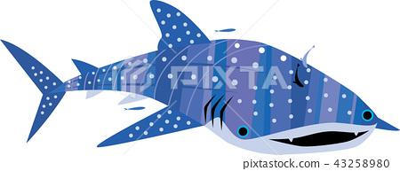 귀여운 고래 상어 43258980