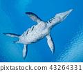 sea, ocean, animal 43264331