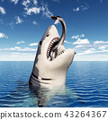 Great white shark with prey in its mouth 43264367