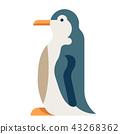 Penguin flat illustration 43268362