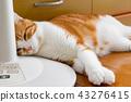 毛孩 貓 貓咪 43276415