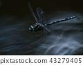 蜻蜓 蟲子 漏洞 43279405