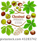 chestnut vector isolated 43283742
