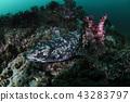 鯊魚 魚 水生的 43283797