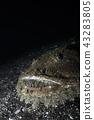 鱼 水生的 水下 43283805