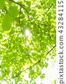 Refreshing fresh green and sun 43284115