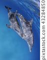 수중, 돌고래, 수영 43284850