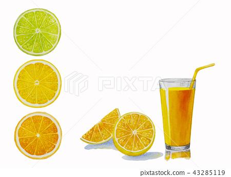 Orange fruit. Hand drawn watercolor painting. 43285119