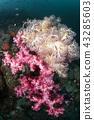 珊瑚 珊瑚礁 水生的 43285603