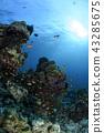 珊瑚礁和太陽 43285675