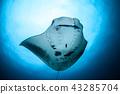 魚 水生的 水下 43285704