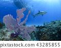 珊瑚 珊瑚礁 海 43285855
