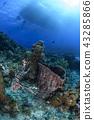 珊瑚 珊瑚礁 海底 43285866