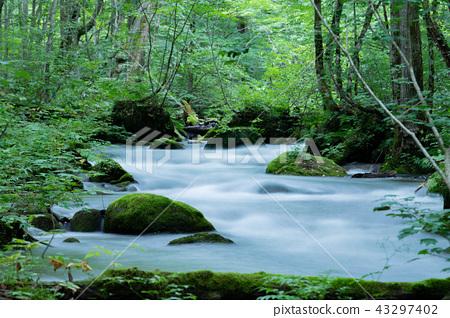 Oirase stream 43297402