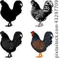 hen silhouette,sketch and illustration 43297709