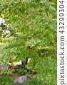 verdure, summer, botanic 43299304