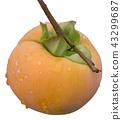 Wet Kaki Fruit Cutout 43299687